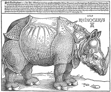 Rhinocerus by Albrecht Dürer, 1515. Source: Wikipedia.