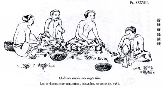 The coins are broken off the 'coin trees'. From A. Schroeder-Annam, Études numismatiques, Paris (1905), pl. 38.