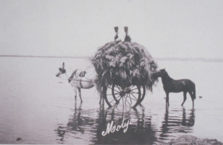Photograph of a donkey cart on the waterway in the Whitaker Museum. Picture of the picture: KW.
