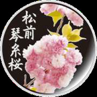 The special silver medal featuring the Blossom of the Year.