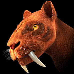 Artistic reconstruction of a sabre tooth tiger. Author: Cicero Moraes/ http://creativecommons.org/licenses/by-sa/3.0/deed.en.