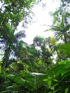 In the rain forest. Photo: Ursula Kampmann