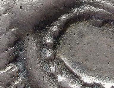 Abb. 9: Vergrößerung von Abb. 8 (Rückseite; Löwenmaul).