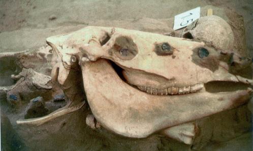 Oberitalienische Denare aus einem ungarischen Grab des 10. Jahrhunderts. Sie waren gelocht, um als Schmuck des Pferdezaumzeugs zu dienen. Rizzolli-Pigozzo Abb. 11.