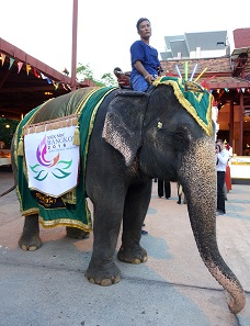 An elephant welcomes the attendees of the MDC - on his back, he carries the logo of the 29th Mint Directors Conference. Photograph: UK.