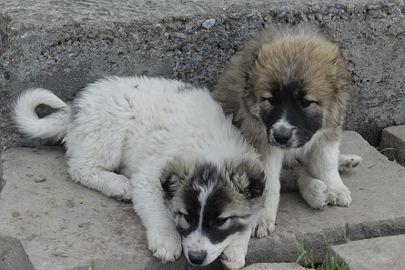 Puppies are cute no matter where you are, also in Hasanlu. Photo: KW.
