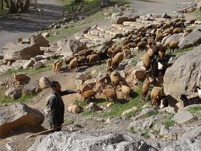 Mitten zwischen den Felsreliefs führt ein Hirte seine Schafe von Weide zu Weide. Foto: KW.