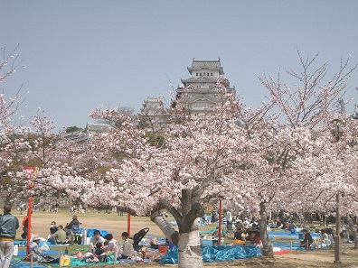 Hanami picnics in the front of Himeji Castle, Japan. Photo: Miya.m / Wikimedia Commons / CC BY-SA 3.0