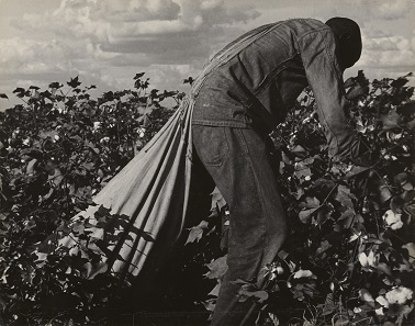 Stoop Labor in Cotton Field, San Joaquin Valley, California by Dorothea Lange. Gelatin silver print on Masonite mount, 1938. The J. Paul Getty Museum, Los Angeles, California (2000.50.11).