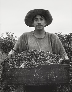 "Grape Picker, Berryessa Valley, California, 1956, from ""Portfolio Two"" by Pirkle Jones. Gelatin silver print, 1956. Bank of America Collection © Special Collections, University Library, University of Santa Cruz: Pirkle Jones and Ruth-Marion Baruch Photographs."