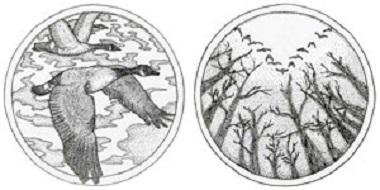 """Jury's Special Award: """"The Wild Goose"""" by Kanta Satou."""