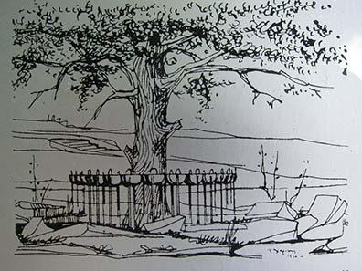 The Sacred Oak. Photograph: KW.