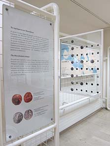 Exhibition of coins in the Museum of Dion. Photograph: KW.
