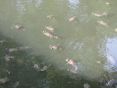 Turtle pond. Photo: KW.