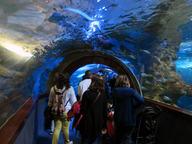 Tunnel under the Shark Tank. Photo: KW.
