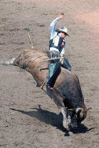 Bull riding at the Calgary Stampede. Photo: Chuck Szmurlo / Wikipedia.