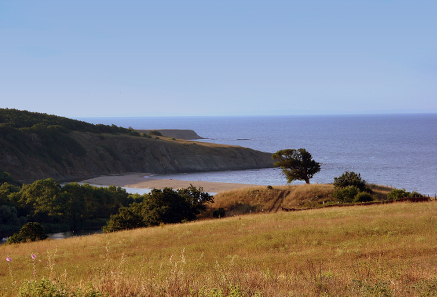 Hoard B (Sinemorets). View of Sinemorets coastline with the hoard findspot (right at the single oak tree). Photo Alex Popov/Panoramio.